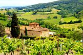 stock photo of stone house  - View through vineyards with stone house - JPG