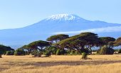 foto of kilimanjaro  - Amboseli National Park and Mount Kilimanjaro in Kenya