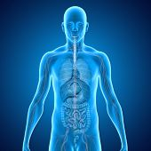 picture of esophagus  - Each organ performs a vital role in the body - JPG