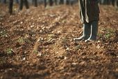 foto of farm land  - Low section of farmer standing on fertile soil in farm - JPG