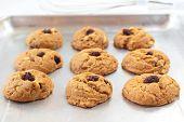 stock photo of baked raisin cookies  - Freshly delicious baked oatmeal raisin cookies - JPG