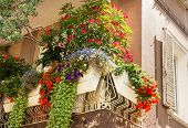 stock photo of lobelia  - Flowers on forged balcony in Rimini - JPG