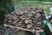 picture of scat  - Dry cow dung - JPG