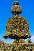 pic of versaille  - shape bush in garden of Versailles France