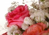 stock photo of rose close up  - Bouquet of beautiful multicolored roses - JPG