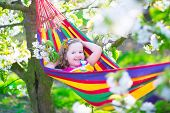 picture of orchard  - Child relaxing in hammock - JPG