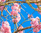 image of fukushima  - Perfect blossom - JPG