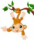picture of baby-monkey  - Cute baby monkey is swinging on a tree - JPG