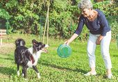 stock photo of collie  - playing with the dog - JPG