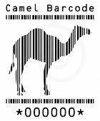 foto of camel  - Vector Image  - JPG