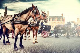 stock photo of carriage horse  - Horse - JPG