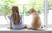 Cute child with labrador retriever on window sill at home poster