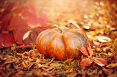 Autumn Halloween Pumpkin. Thanksgiving day background. Pumpkin patch. Beautiful Holiday Autumn festi poster