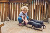 Toddler Girl Caresses And Feeds Pig Piglet In The Petting Zoo. Concept Of Sustainability, Love Of Na poster
