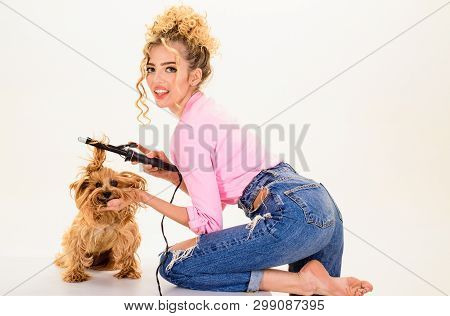 poster of Pet Salon. Petshop. Dog Salon. Beauty Salon For Animals. Grooming. Grooming Master Making Dog Hairst
