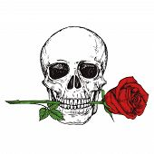 Hand Drawn Happy Human Skull With Red Rose - Sketched Skull Printable Vector Illustration. Skull Hum poster