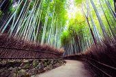 Arashiyama Bamboo Forest Famous Place Kyoto Japan poster