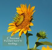 Inspirational Motivational Quote- Choose Positivity Today.  Beautiful Sunflowers With Clean Blue Sky poster