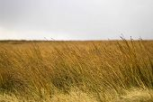 pic of boggy  - Some boggy moor grass waving in the wind on a cloudy day - JPG