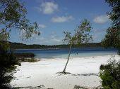 stock photo of mckenzie  - lake mckenzie, the