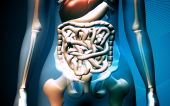 foto of excretory  - Digital illustration of human digestive system in colour background - JPG