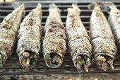 foto of snakehead  - Salt fish  - JPG