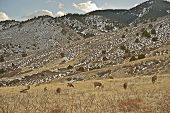 picture of taxidermy  - Front Range Elks in Colorado United States - JPG