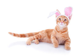 picture of bunny costume  - An Easter bunny cat in bunny ears - JPG