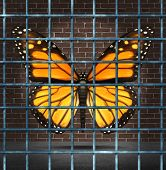 image of trap  - Trapped creativity and creative limitations business concept as a monarch butterfly behind prison bars as a symbol of education imagination adversity - JPG