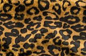 foto of leopard  - Fur animal print as background - JPG