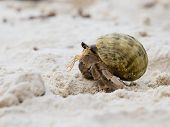 foto of hermit  - Hermit crab in the shell of a snail [[** Note: Shallow depth of field] ** Note: Visible grain at 100%, best at smaller sizes - JPG