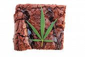 picture of brownie  - Cooking with Cannibals - JPG