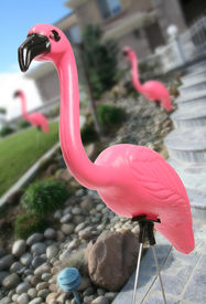 pic of pink flamingos  - Pink flamingos in the landscape of a residential home - JPG