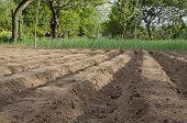 foto of plow  - Plowed field in the northern Bulgaria in the summer - JPG