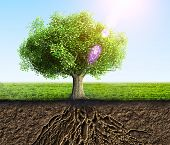 picture of humus  - a green tree with roots and soil - JPG