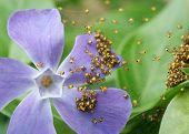 stock photo of baby spider  - lots of tiny baby spiders on a flower - JPG