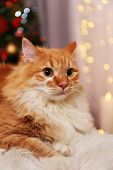 image of lovable  - Lovable red cat on lights background - JPG