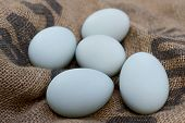 picture of duck egg blue  - Blue duck eggs resting on a hessian sack - JPG