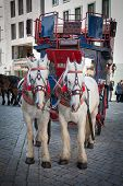 stock photo of carriage horse  - Urban life of Dresden - JPG