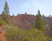 pic of butts  - Lava Butte forest trees and crater near Bend Oregon - JPG