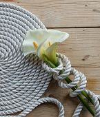 picture of calla  - Beautiful white Calla lily over rope and wooden table - JPG