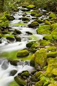 picture of gatlinburg  - Silky stream captured in the Smoky Mountains during springtime - JPG