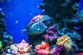 image of saltwater fish  - Colorful fish in aquarium saltwater world - JPG