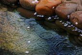 stock photo of raindrops  - raindrop in water - JPG