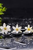 picture of gardenia  - Still life with gardenia with green plant on black pebbles  - JPG