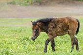 pic of pony  - yoeng pony - JPG