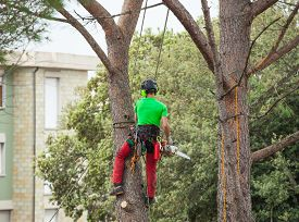 pic of man chainsaw  - Man with safety equipment and chainsaw pruning pine tree. ** Note: Shallow depth of field - JPG