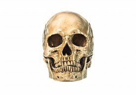 picture of eye-sockets  - The Human skull on white background - JPG