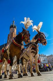 image of carriage horse  - Horse carriages at main square in Krakow in a summer day Poland - JPG